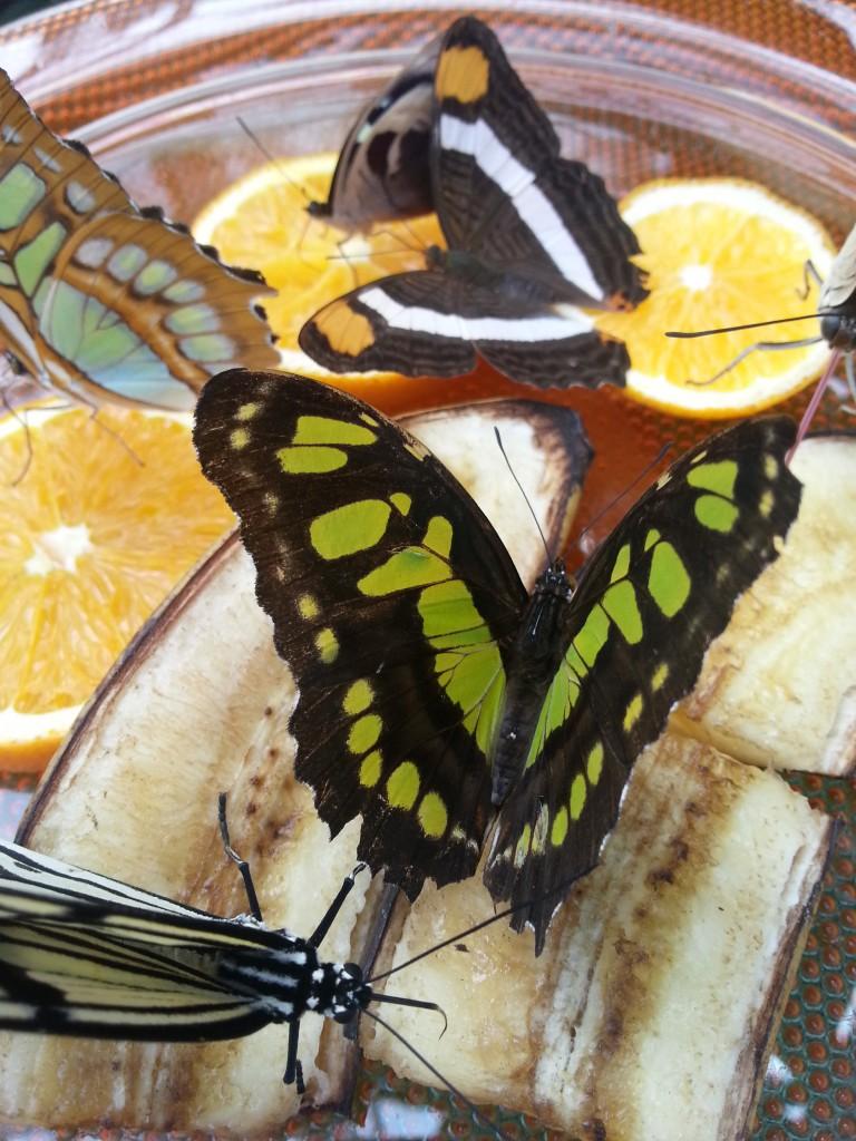 Schmetterling Stephan Raif EmoBodySync